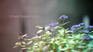 Where flowers grow and knowledge flows in 3D video