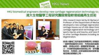 HKU biomedical engineers develop new cartilage regeneration technology to grow cartilage