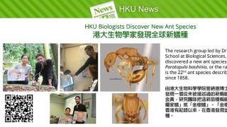 HKU Biologists Discover New Ant Species