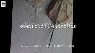 Stephen Hui Geological Museum - Special Exhibition