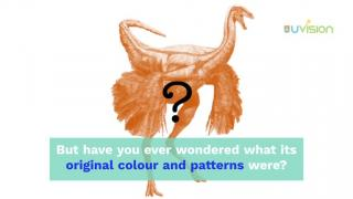 What colour were fossil animals?